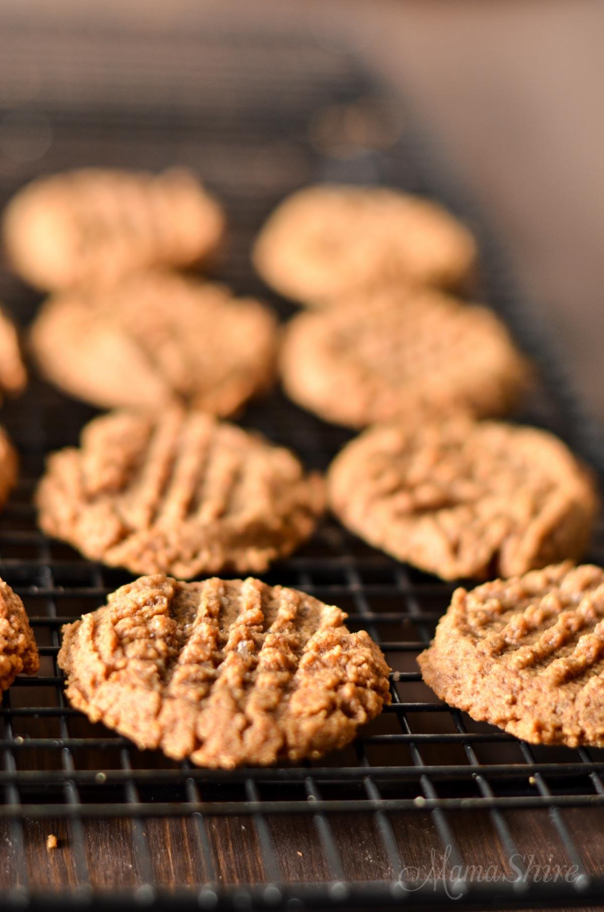 recipe: sugar free sugar cookies with stevia [32]